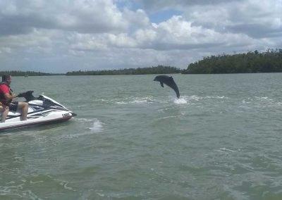 Jet ski riders encounter dolphin on Marco Island